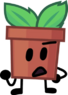 Potted plant-