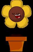 Sunflower (RC Camp Pose)