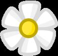 Pency's flower