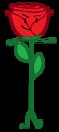 Rose-0