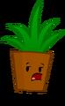 Plant Pose II