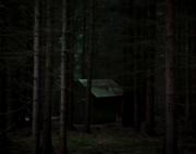 Shedindarkforest