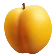 Apricot PNG12633