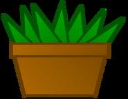 Aloe Vera Body