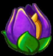 Shirnking Violet