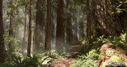 Andrew-hamilton-forest-01-02