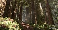 Andrew-hamilton-forest-01-05