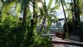 Scarif jungle loading screen.png