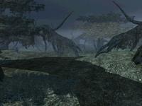 Dagobah Swamp