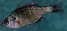 Fishcloseup