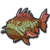 Sea grouper icon