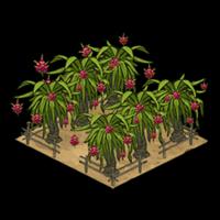 Orchard dragonfruit icon
