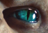 Regent eye