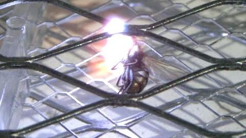 Electric Bug Zapper in Slow Motion - The Slow Mo Guys