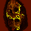 Isdf13 shell