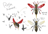 Rosa Hornet