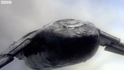 Shuttle close-up