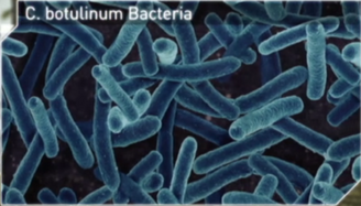 Bot bacteria