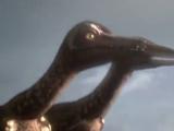 Alaskan Troodon