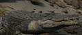 Crocplanet.png
