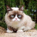 Lionpaw-Leeuwpoot's avatar