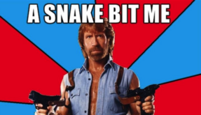 Chuck21 SnakeIncident