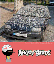 Angry-Birds-in-real-life
