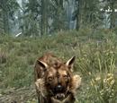 Faelor (Wyrmstooth)