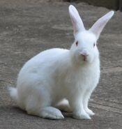 Rabbit (1)