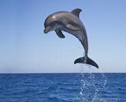Dolphin-births-hurricane-katrina-675560-