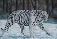 White tiger1