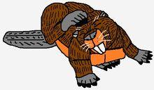 Beaver Scratching His Head (1)