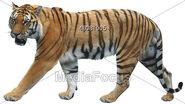 Tiger-clipart-48081005