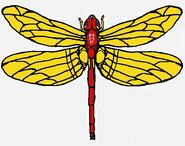 Flash in Dragonfly Mode