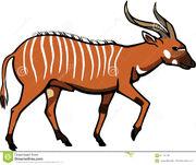 Bongo-antelope-illustration-male-eps-file-pending-67173749