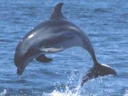 Dolphin-Images-60
