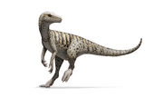 Herrerasaurus ischigualastensis Illustration