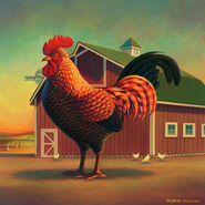 Rooster-and-the-barn-robin-moline