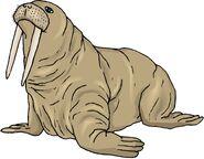 Cswalrustusk