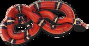 Red-Snake
