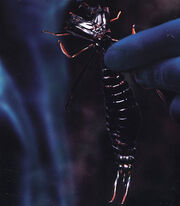 Avatar Arachnoid