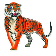 41570-bengal-tiger-illustration