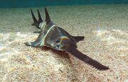 Port-sawfish-420x0