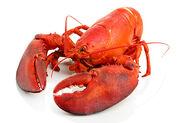 Lobster (4)