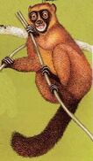 Csgoldenbamboolemur Maxitrooper