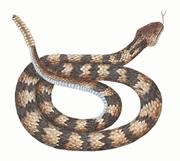 Diamondback-snake-clipart-8
