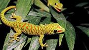 Gecko-tree-closeup-colorful.ngsversion.1396531130568