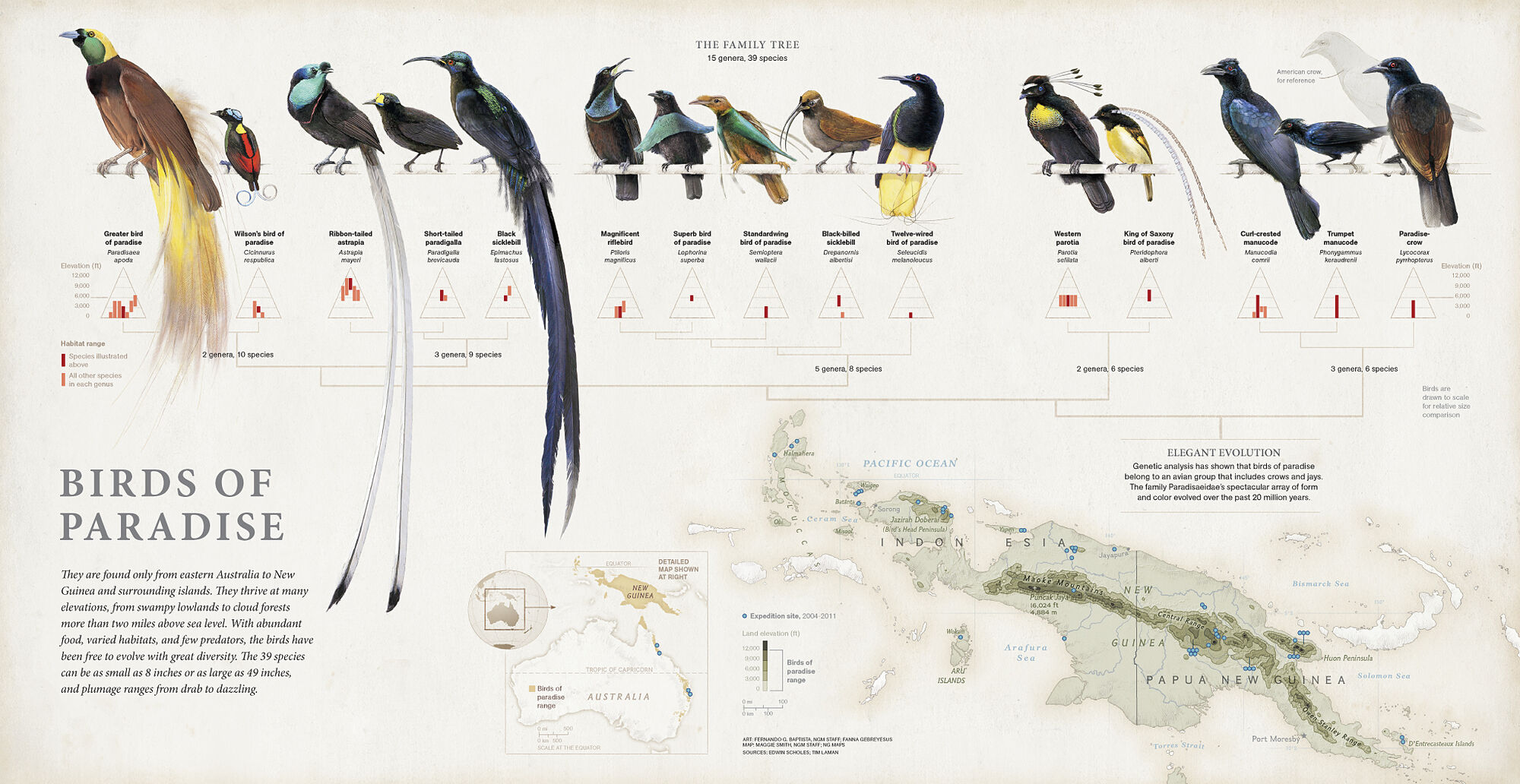 Birds of Paradise | Beast Wars Transformers Wiki | FANDOM powered by ...