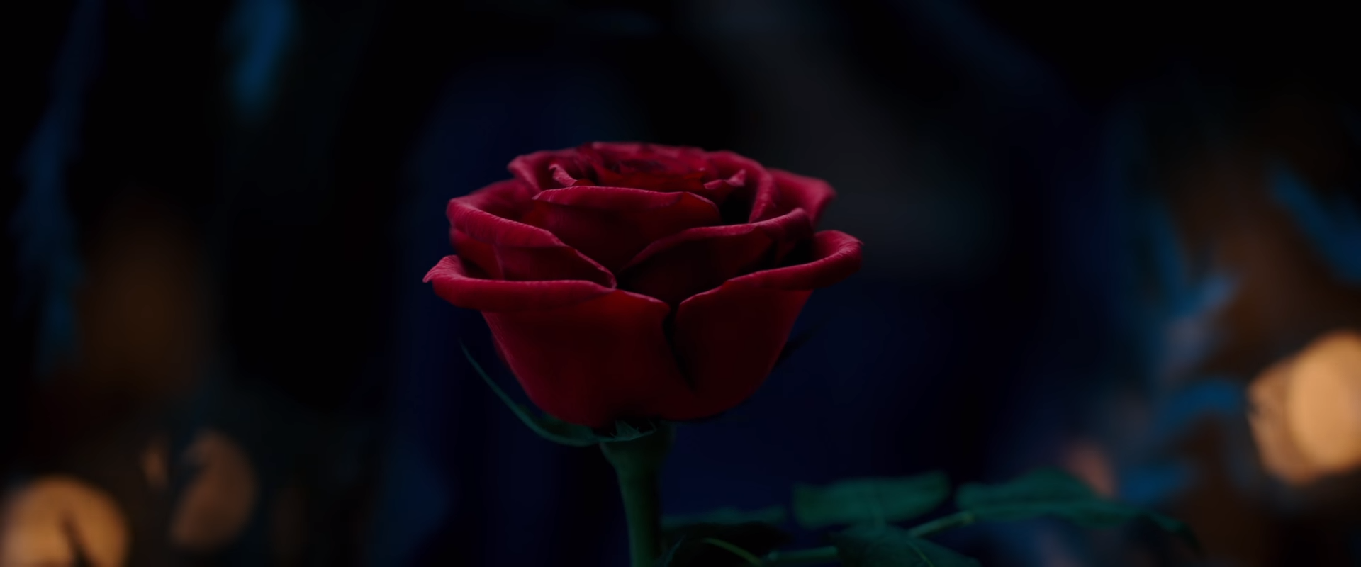 The Enchanted Rose | Beauty and the Beast 2017 Movie Wiki | FANDOM ...