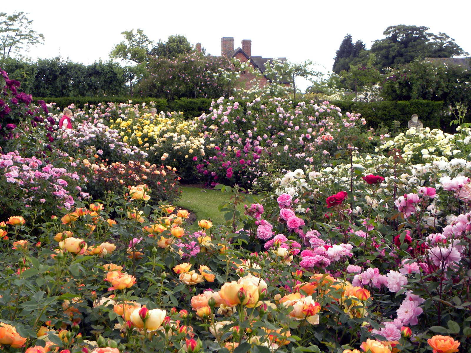 Genial Roses. This Is The Beauxbatons Rose Garden ...